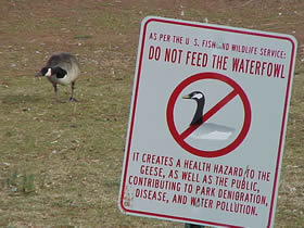 a sign that reads Do not feed the waterfowl